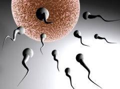 />Заболевания, состояния или симптомы, наличие которых может служить признаком мужского бесплодия