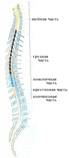 Лечение эректильной дисфункции у больных со спинальной травмой